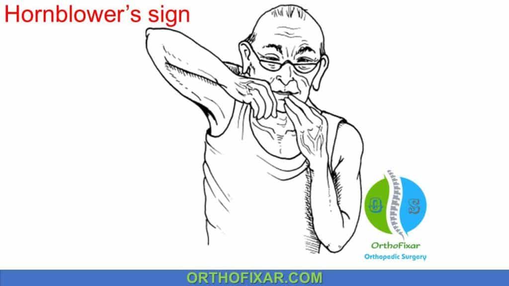 Hornblower Sign