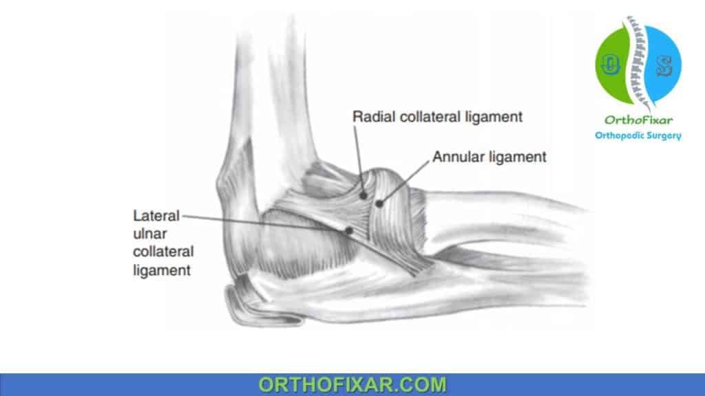 Lateral collateral ligament (LCL) complex