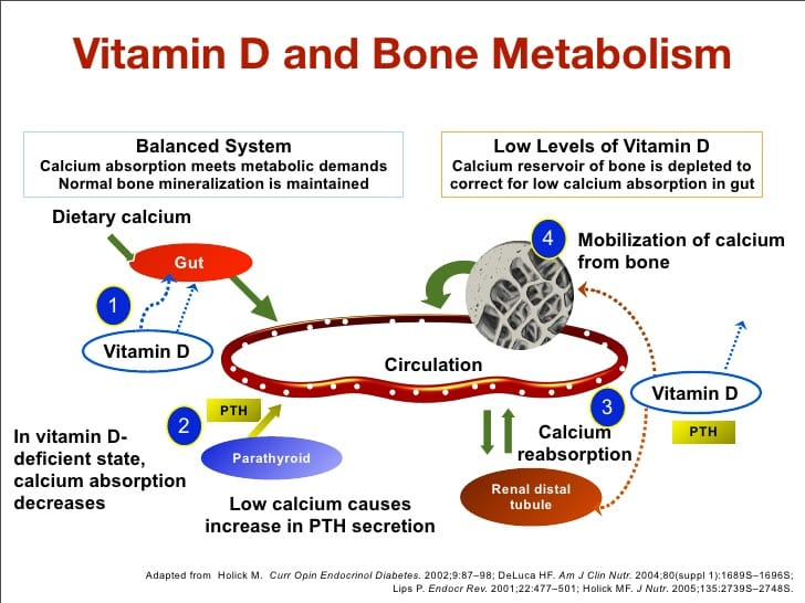 Bone Metabolism and vitamin D